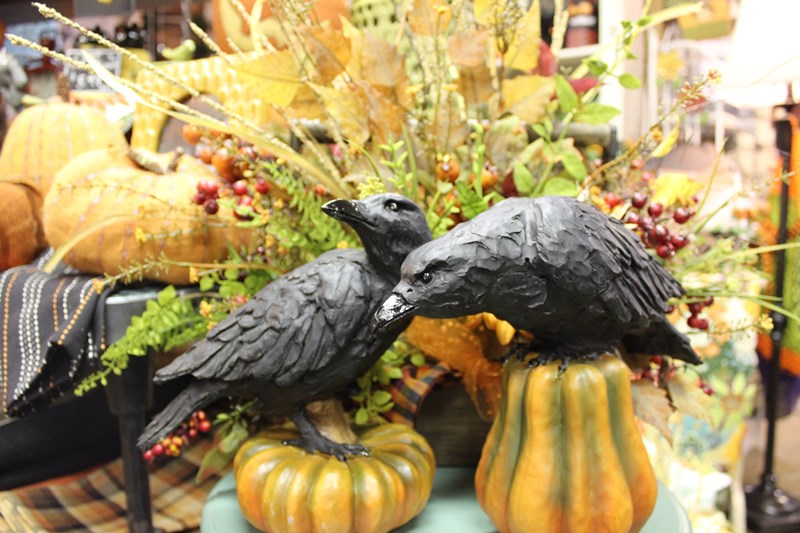 Crows on pumpkins